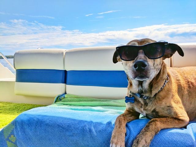 犬の夏バテ予防、何すればいいの?『夏の暑さ対策に役立つ、犬の夏バテ予防対策』紹介します。