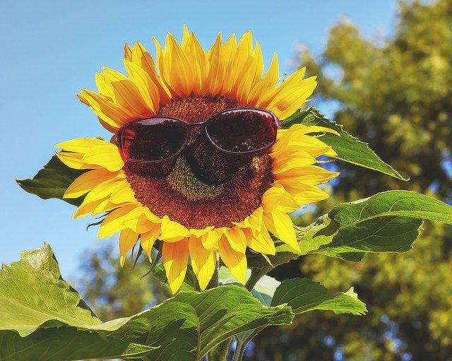 夏の終わり、紫外線でダメージを受けたお肌のケアを始めよう!