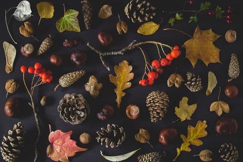 食欲の秋でも気にせず食べたい、ダイエットにおすすめの秋の食材5選