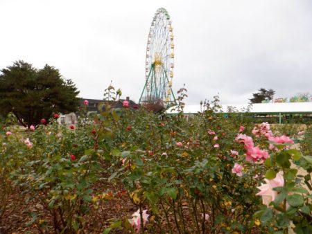 国営ひたち海浜公園のお花たち