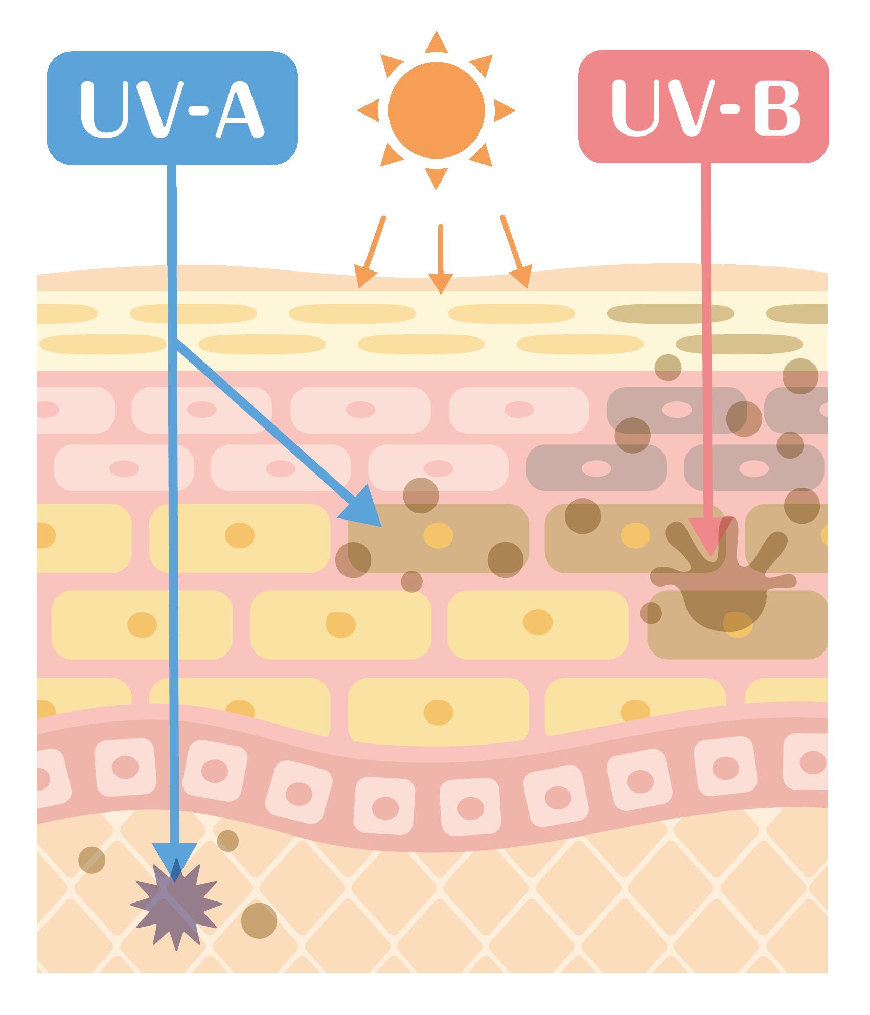 紫外線UV-AとUV-Bとは