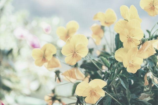 花言葉で届く伝えたい気持ち。大切な人に贈る誕生月の花束