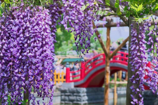 亀戸天神社の祭り